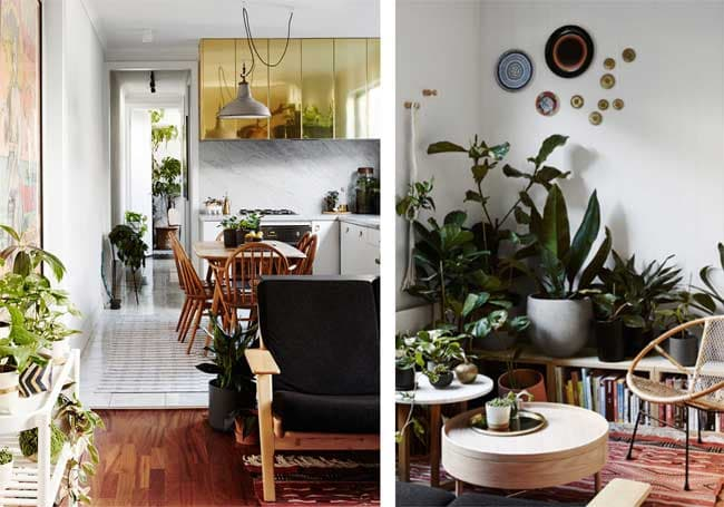 گیاهان سبز و فنگ شویی در دکوراسیون خانه
