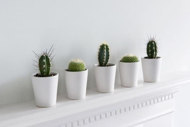 انواع گیاهان کم دردسر مناسب داخل آپارتمان