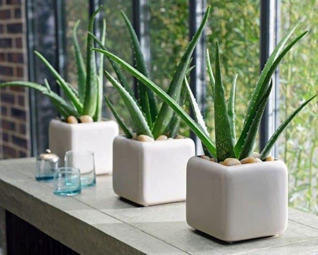 گیاه خانگی بهبود دهنده کیفیت هوا اتاق خواب