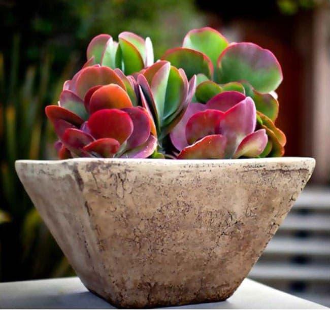 گیاه مناسب محیط های بسته و هوای خشک