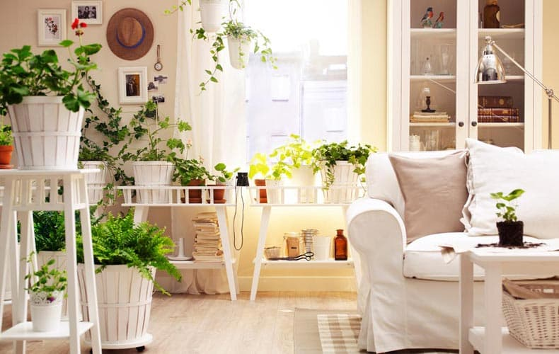 10 نمونه از گیاهان مناسب برای فضای داخلی آپارتمان ها