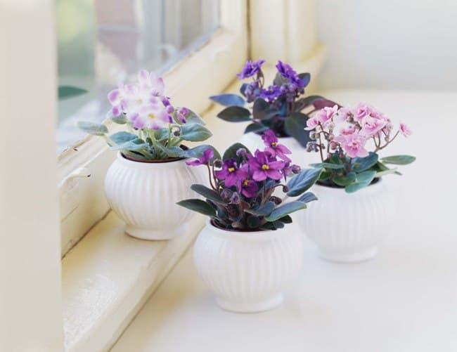 گل های آپارتمانی بنفش رنگ برای دکوراسیون داخی