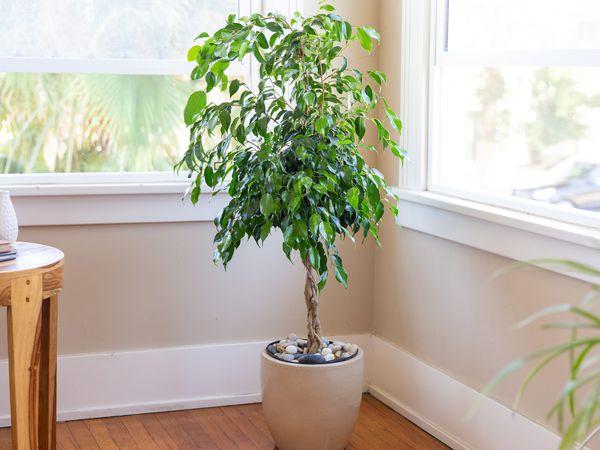 گیاه داخلی بدون نیاز به نور مستقیم خورشید